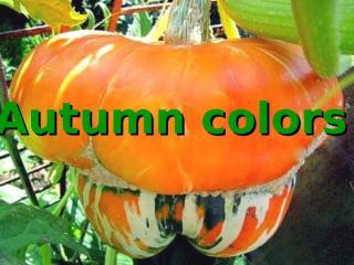Autumn colors (NXPowerLite).pps