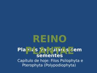 Pteridófitas - Aula 2.ppt