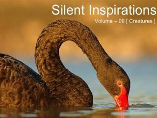 Silent INspiration_3.pptx